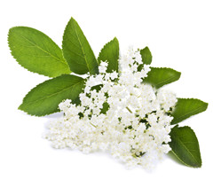 Elderflower Moj